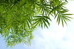 Bamboo leaf with sky Royalty Free Stock Image