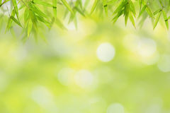 Bamboo leaf and soft green bokeh background Stock Photos