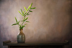 Bamboo leaf in vase stock image