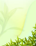 Bamboo leafs abstract background Royalty Free Stock Photos