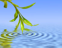 Bamboo leafs over blue water Royalty Free Stock Images
