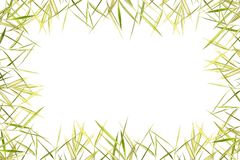Bamboo leave frame Royalty Free Stock Images