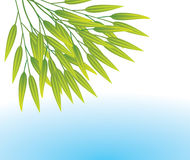 Bamboo leaves. Vector illustration of bamboo leaves over water Stock Images