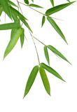 Bamboo Leaves. Isolated over a white background Stock Image
