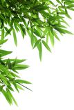 Bamboo leaves Royalty Free Stock Photography