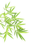 Bamboo leaves. Asian bamboo leaves isolated on white background Royalty Free Stock Image