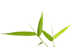 Bamboo leaves. On a twig on white Royalty Free Stock Photo