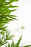 Bamboo leaves. Isolated on white Stock Photography