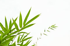 Bamboo leaves. Isolated on white Royalty Free Stock Photo