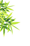 Bamboo Leaves Stock Photography