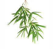 Bamboo leaves. Isolated on a white background Stock Photos
