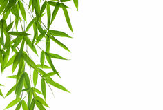 Bamboo- leaves. High resolution image of border with wet bamboo-leaves isolated on a white background. Please take a look at my similar bamboo-images Stock Photography