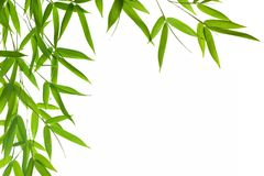 Bamboo- leaves. High resolution image of border with wet bamboo-leaves isolated on a white background. Please take a look at my similar bamboo-images Royalty Free Stock Photo