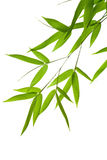 Bamboo- leaves. High resolution image of wet bamboo-leaves isolated on a white background. Please take a look at my similar bamboo-images royalty free stock image