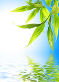 Bamboo leaves. Reflected in rendered water Stock Image