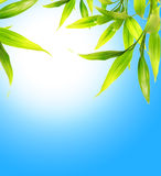 Bamboo leaves. Over blue sky vector illustration