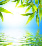 Bamboo leaves. Reflected in rendered water vector illustration