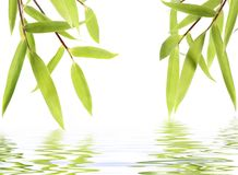 Bamboo leaves. Isolated over white flood Stock Image