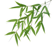 Bamboo- leaves Royalty Free Stock Photos