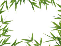 Bamboo- leaves. Frame of bamboo-leaves isolated on a white background. Please take a look at my similar bamboo-images Royalty Free Stock Image