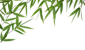 Bamboo leaves. Bamboo-leaves isolated on a white background. Please take a look at my similar bamboo-images Stock Photos