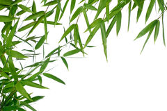 Bamboo- leaves. High resolution image of wet bamboo-leaves isolated on a white background. Please take a look at my similar bamboo-images Stock Images