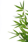 Bamboo leaves Royalty Free Stock Photo