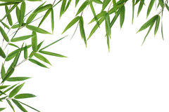 Bamboo- leaves. High resolution image of wet bamboo-leaves isolated on a white background. Please take a look at my similar bamboo-images Stock Photography