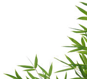 Bamboo- leaves Royalty Free Stock Photography
