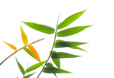 Bamboo leaves Stock Photos