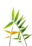 Bamboo leaves Royalty Free Stock Photos