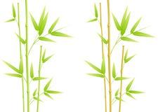 Bamboo leaves. Isolated on white stock illustration