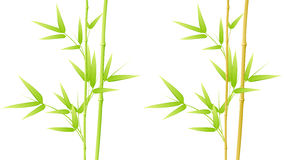 Bamboo leaves vector illustration