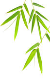 Bamboo leaves Stock Image