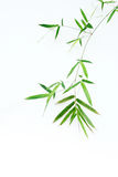Bamboo leaves. High resolution image of border with wet bamboo-leaves isolated on a white background. Please take a look at my similar bamboo-images Royalty Free Stock Photo