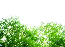 Bamboo leaves against white background Royalty Free Stock Image