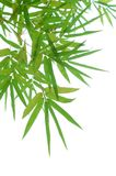 Bamboo leaves background Stock Photography