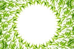 Bamboo leaves background Stock Image