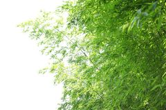 Bamboo leaves background Stock Images