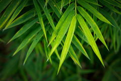 Bamboo leaves background Royalty Free Stock Photos