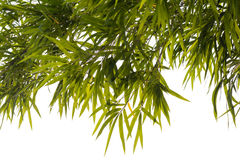 Bamboo leaves background isolate. Stock Photo