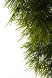 Bamboo leaves background isolate. Royalty Free Stock Image