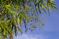 Bamboo leaves on blue sky background. Bamboo leaf on sky. Asian nature zen photo background. Royalty Free Stock Photography