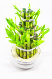 Bamboo and leaves Royalty Free Stock Images