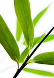 Bamboo leaves close-up Stock Images