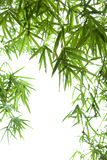 Bamboo leaves collection Royalty Free Stock Photography