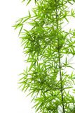 Bamboo leaves collection Royalty Free Stock Photos