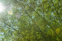 Bamboo leaves in forest Stock Photos