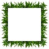 Bamboo leaves frame stock photo