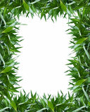 Bamboo leaves frame background. Frame of bamboo-leaves isolated on a white background Stock Image